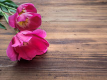 Tulipas cor-de-rosa, arranjo floral no fundo de madeira das placas idosas e um espaço para mensagens Fundo para o ` s da mãe Fotos de Stock