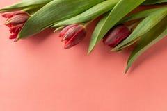 Tulipas cor-de-rosa coloridas no fundo de papel peachy brilhante Configuração lisa, vista superior, espaço da cópia foto de stock