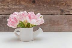 Tulipas cor-de-rosa e lata molhando pequena imagem de stock royalty free