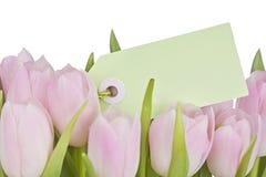 Tulipas cor-de-rosa e nota vazia Fotos de Stock Royalty Free