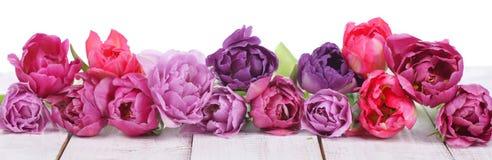 Tulipas cor-de-rosa em seguido Foto de Stock Royalty Free