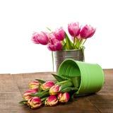 Tulipas cor-de-rosa em um recipiente do ramalhete Fotos de Stock Royalty Free