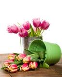 Tulipas cor-de-rosa em um recipiente do ramalhete Imagem de Stock