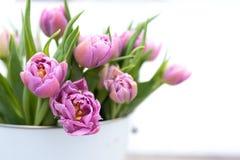Tulipas cor-de-rosa macias para o dia de mães Imagem de Stock Royalty Free