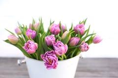 Tulipas cor-de-rosa macias para o dia de mães Imagens de Stock