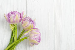 Tulipas cor-de-rosa nas placas de madeira gastos brancas Foto de Stock Royalty Free