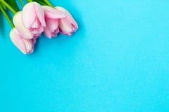 Tulipas cor-de-rosa no fundo azul Configuração lisa, vista superior Fundo dos Valentim Imagens de Stock Royalty Free