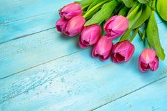 Tulipas cor-de-rosa no fundo azul de madeira Feriado da concepção, o 8 de março, dia do ` s da mãe Espaço liso da configuração e  Fotografia de Stock Royalty Free