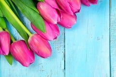 Tulipas cor-de-rosa no fundo azul de madeira Feriado da concepção, o 8 de março, dia do ` s da mãe Espaço liso da configuração e  Fotos de Stock