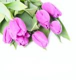 Tulipas cor-de-rosa Foto de Stock Royalty Free
