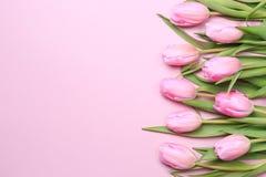 Tulipas cor-de-rosa no fundo cor-de-rosa Configuração lisa, vista superior valenti Foto de Stock Royalty Free
