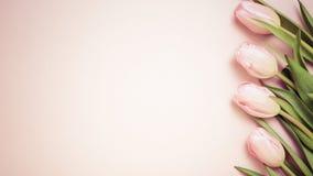 Tulipas cor-de-rosa no fundo cor-de-rosa Configuração lisa, vista superior valenti Imagens de Stock