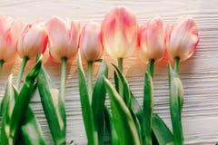 Tulipas cor-de-rosa no fundo de madeira rústico branco vista macia do sp Imagem de Stock Royalty Free
