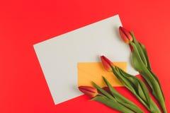 Tulipas das flores e envelope amarelo com o cartão de papel vazio no fundo vermelho Imagens de Stock Royalty Free