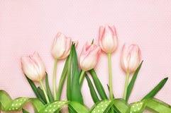 Tulipas de florescência da mola no fundo cor-de-rosa fotos de stock
