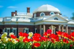 Tulipas de Monticello na mola Fotografia de Stock Royalty Free