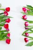 Tulipas, decoração floral da mola o 8 de março Foto de Stock Royalty Free