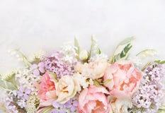 Tulipas delicadas no fundo festivo de florescência das flores da mola imagem de stock royalty free