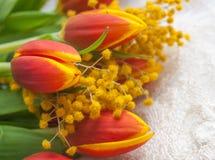 Tulipas e mimosa vermelhas foto de stock