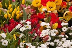 Tulipas e outras flores coloridas na exposição no mercado dos fazendeiros Fotos de Stock