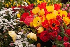 Tulipas e outras flores coloridas na exposição no mercado dos fazendeiros Imagens de Stock