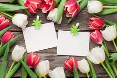 Tulipas e quadros coloridos da foto Imagens de Stock Royalty Free