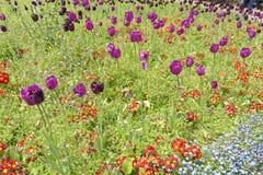 Tulipas e wildflowers, jardins quadrados da trindade, Londres, Inglaterra Imagens de Stock