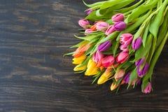 Tulipas em cores brilhantes Fotos de Stock