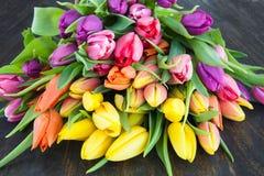 Tulipas em cores brilhantes Imagens de Stock Royalty Free