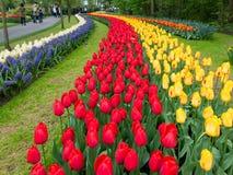 Tulipas em jardins de Keukenhof na Holanda Imagem de Stock