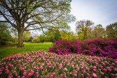 Tulipas em Sherwood Gardens Park, em Baltimore, Maryland Foto de Stock Royalty Free