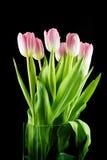 Tulipas Flores cor-de-rosa em um fundo preto Imagem de Stock Royalty Free