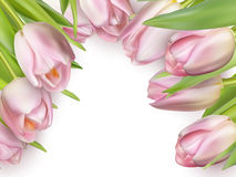 Tulipas frescas cor-de-rosa no branco Eps 10 Imagens de Stock