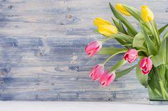 Tulipas frescas da meia mola amarelas e ramalhete vermelho no fundo de madeira azul gasto rústico com espaço da cópia Fotos de Stock