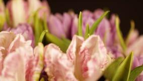 Tulipas luz rosa em um fundo preto Um ramalhete de tulipas cor-de-rosa em um fundo preto luz - flor cor-de-rosa da tulipa vídeos de arquivo