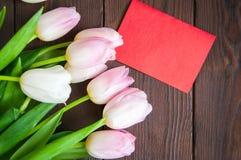 Tulipas rosados Foto de Stock