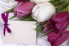 Tulipas roxas e brancas com Livro Branco em um fundo de madeira branco com o cartão para o texto O dia da mulher 8 de março Dia d Foto de Stock Royalty Free