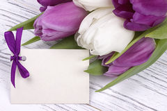 Tulipas roxas e brancas com Livro Branco em um fundo de madeira branco com o cartão para o texto O dia da mulher 8 de março Dia d Imagem de Stock Royalty Free