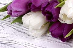 Tulipas roxas e brancas em um fundo de madeira branco O dia da mulher 8 de março Fotos de Stock Royalty Free