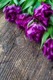 Tulipas roxas no fundo de madeira Imagens de Stock Royalty Free