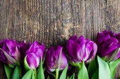 Tulipas roxas no fundo de madeira Fotografia de Stock Royalty Free
