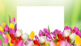 Tulipas sobre o fundo verde borrado Imagens de Stock