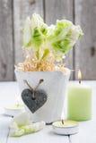 Tulipas verdes, iluminadas vela Imagens de Stock Royalty Free