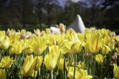 Tulipas vermelhas amarelas holandesas Fotos de Stock