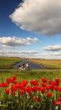 Tulipas vermelhas contra o canal na Holanda Fotos de Stock Royalty Free