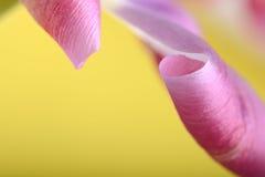 Tulipas vermelhas contra um fundo amarelo, fim acima das flores Fotos de Stock Royalty Free