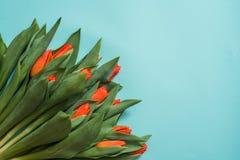 Tulipas vermelhas e dois corações de madeira sobre o fundo de madeira azul, tulipas vermelhas em um fundo azul Vista de acima lug Foto de Stock