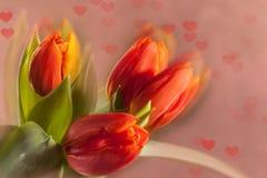 Tulipas vermelhas no fundo cor-de-rosa Foto de Stock