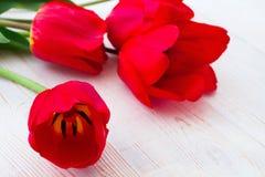 Tulipas vermelhas no fundo de madeira Foto de Stock Royalty Free