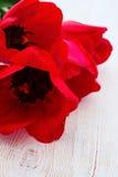 Tulipas vermelhas no fundo de madeira Foto de Stock